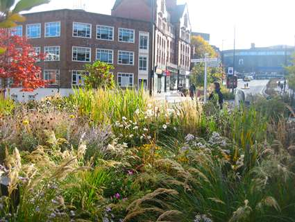 Plants and greenery part of Grey to Green scheme in Sheffield city centre
