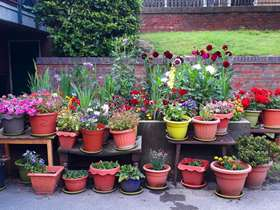 A range of plant pots displaying various flowers and plants