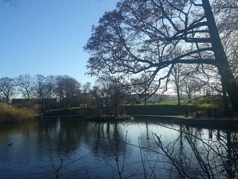Pond, trees and blue skies