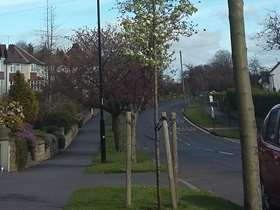 Action plan agreed following street tree inspections